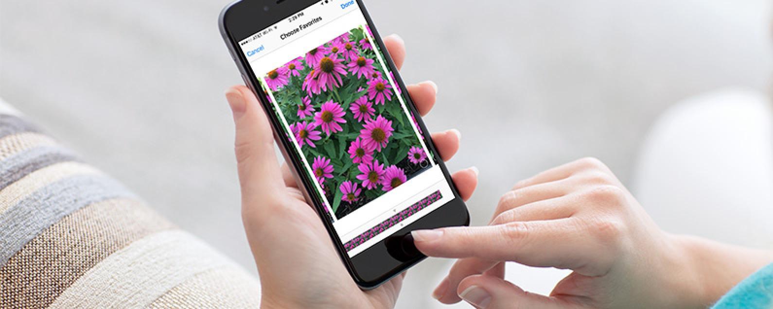 iPhone Burst Mode: How to Take, View, & Save Burst Photos on