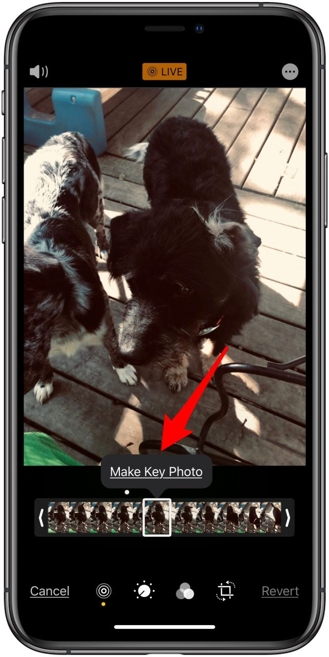 choose key photo for live photo