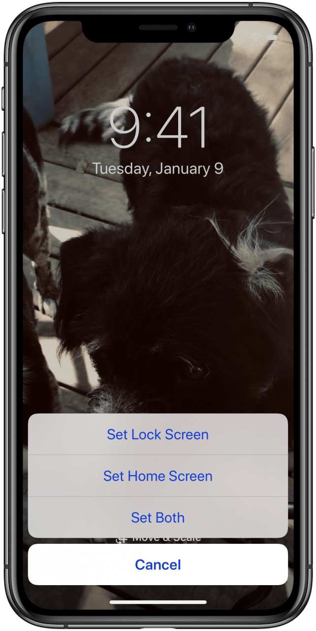 How To Set A Live Photo As The Wallpaper Background On Your Iphone
