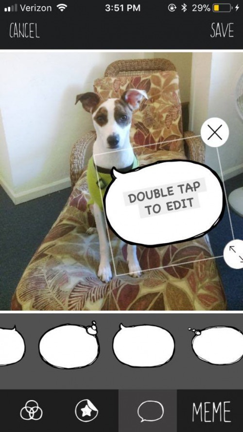 The Ultimate App for Dog Photos: BarkCam