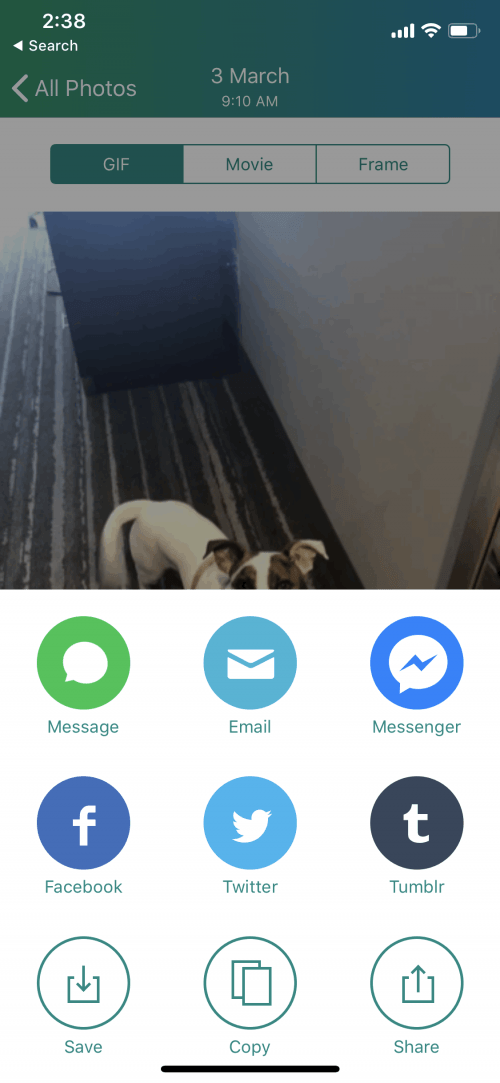 2 Easiest Ways to Turn Your Live Photos into a GIF or Video